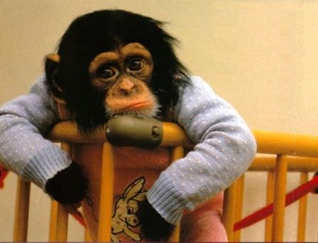 monkey sad - OpinionatedMale.com